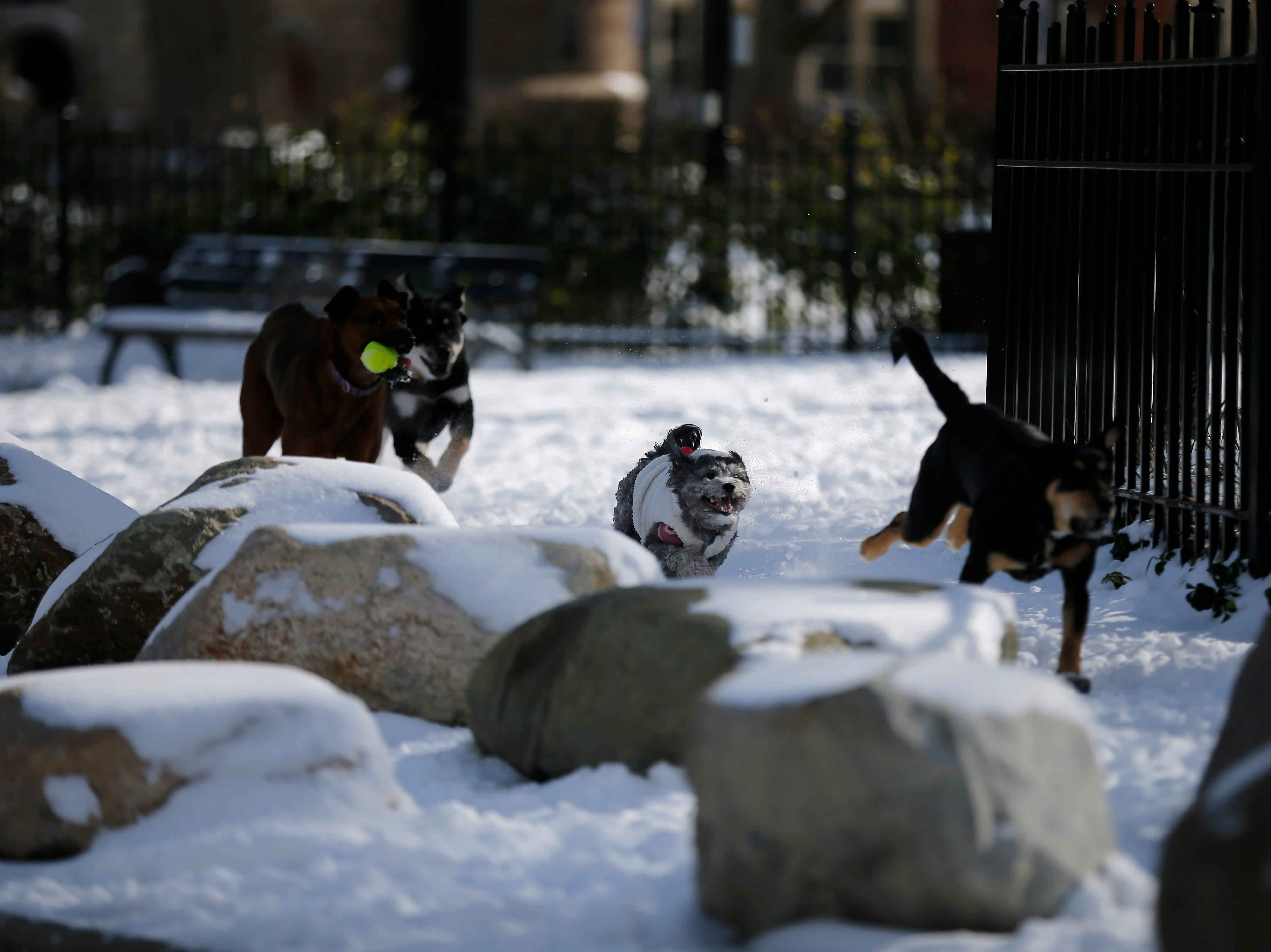 Dogs frolic in the dog park at Washington Park in the Over-the-Rhine neighborhood of Cincinnati on Sunday, Jan. 20, 2019. Temperatures remain below 15 degrees with windchills as low as 4 in the region Sunday.