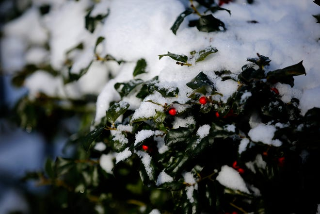 Snow covers bushes at Washington Park in the Over-the-Rhine neighborhood of Cincinnati on Sunday, Jan. 20, 2019. Temperatures remain below 15 degrees with windchills as low as 4 in the region Sunday.