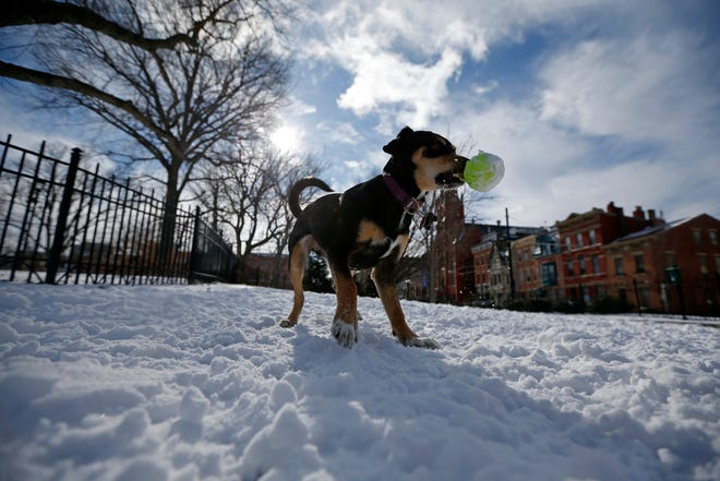 Remi, 11 months, shakes a tennis ball from her owners Joe Keller and Blythe Gross-Hutton, of Over-the-Rhine, at Washington Park in the Over-the-Rhine neighborhood of Cincinnati on Sunday, Jan. 20, 2019. Temperatures remain below 15 degrees with windchills as low as 4 in the region Sunday.
