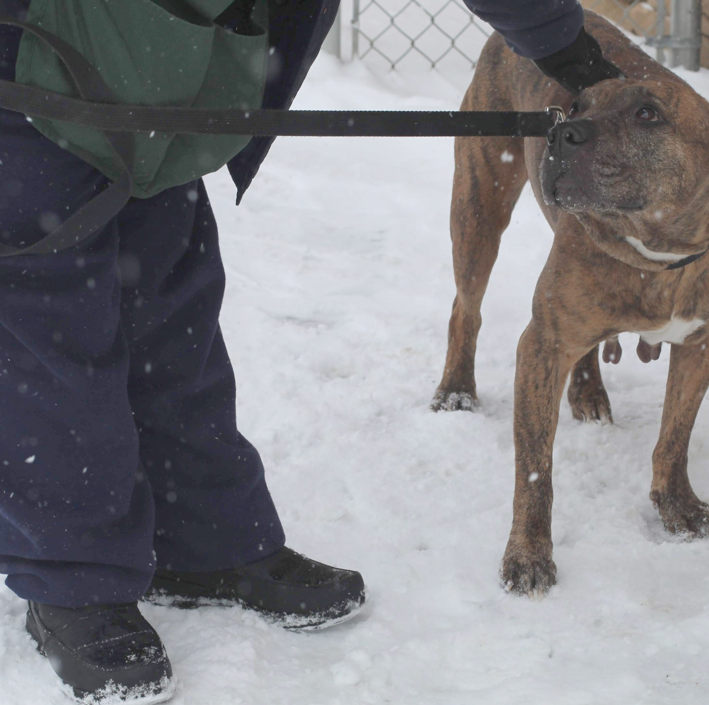 Not just a walk in the park: Volunteer dog walkers help during snowstorm at Lollypop Farm