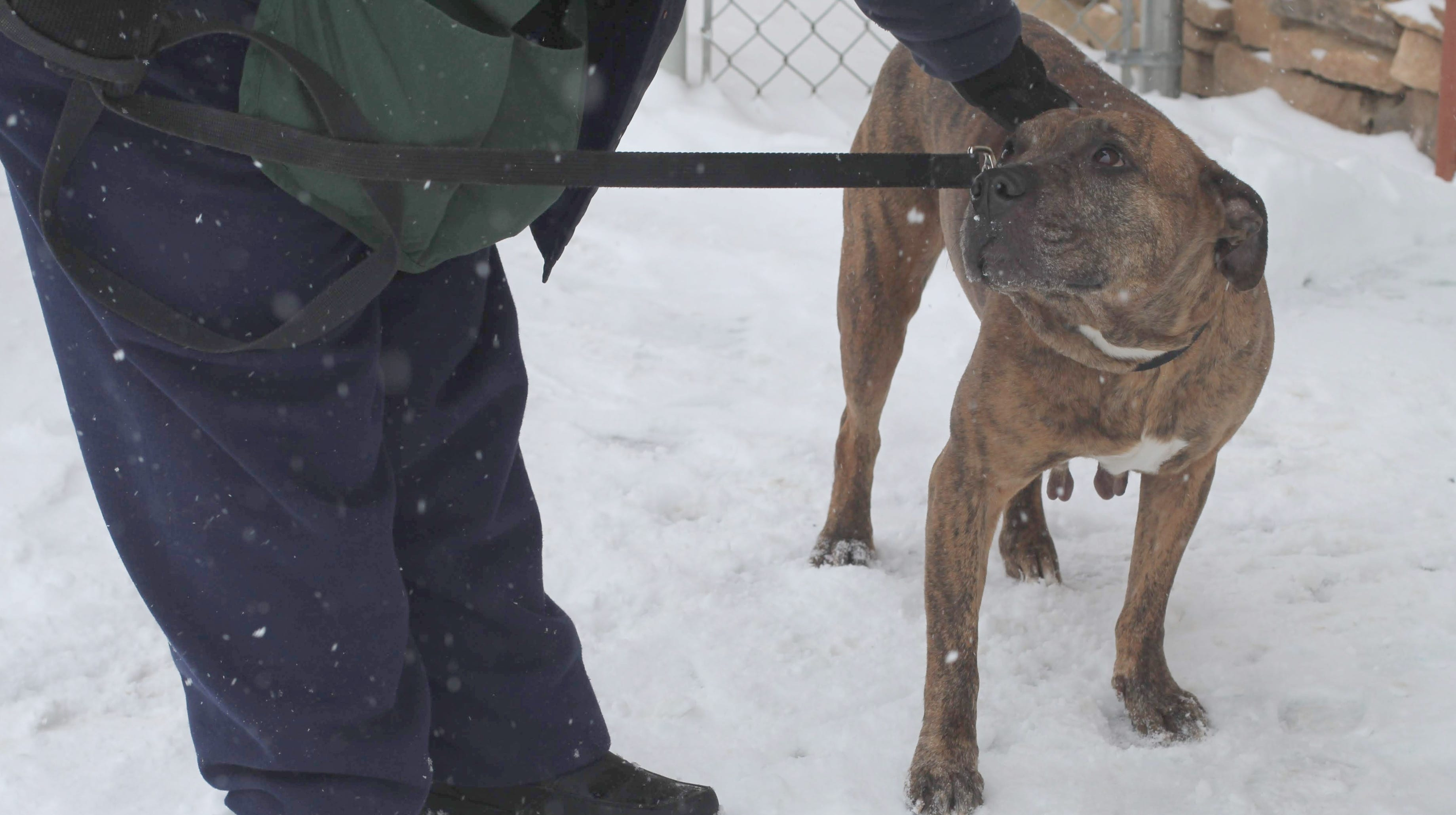 Volunteer dog walkers help during snowstorm at Lollypop Farm