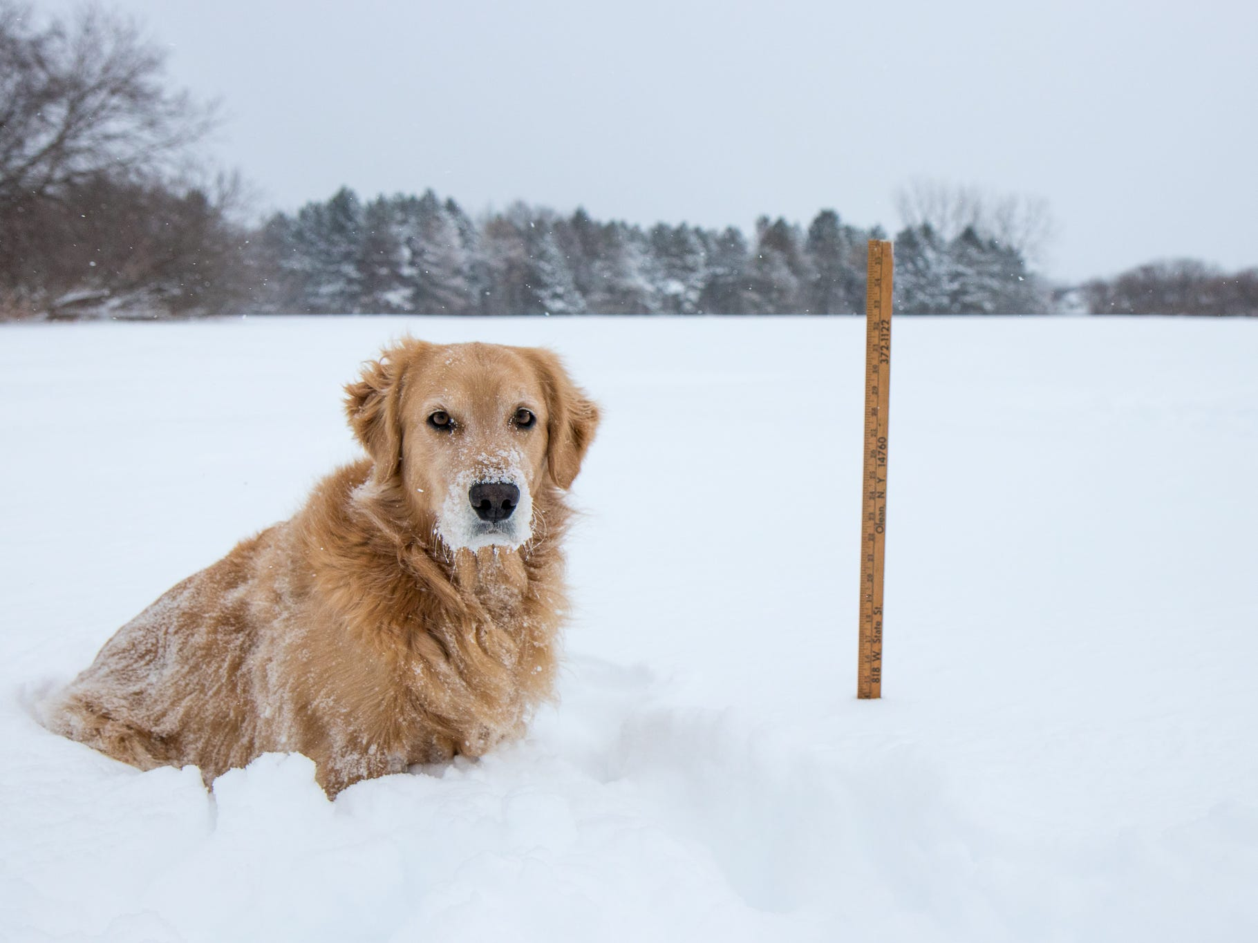 Hilton received 14 inches of snow - or almost two-thirds of a golden retriever - as of Sunday afternoon.
