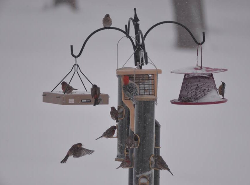 Birds at a feeder in the morning. Photo by Jill Ely Frier.