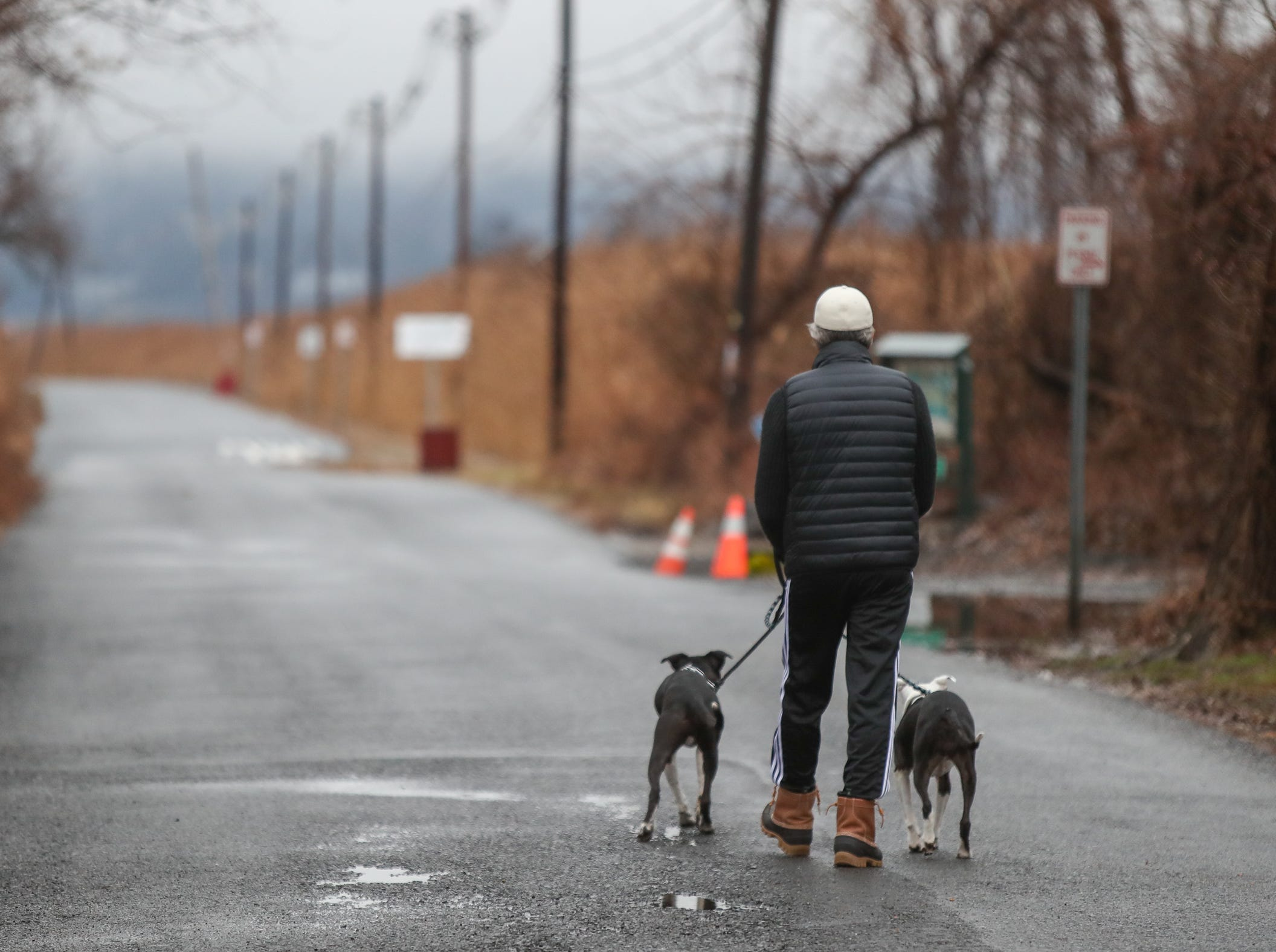 A man walks his dogs on Ferry Rd. in Piermont on Sunday, January 20, 2019.