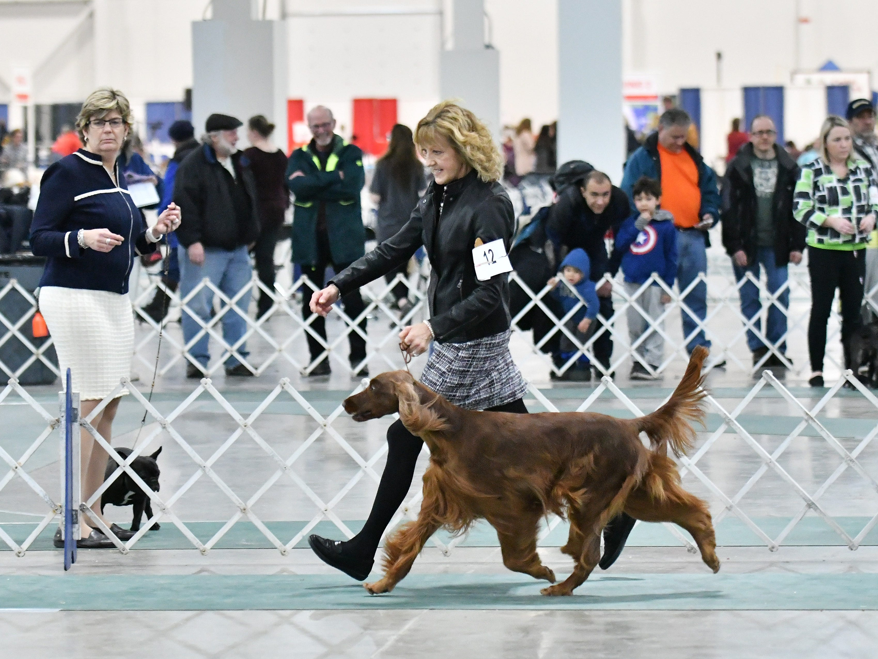 Toni Whipple of Taylor, left, show her Irish setter, Teezer, during competition at the Michigan Winter Dog Classic.