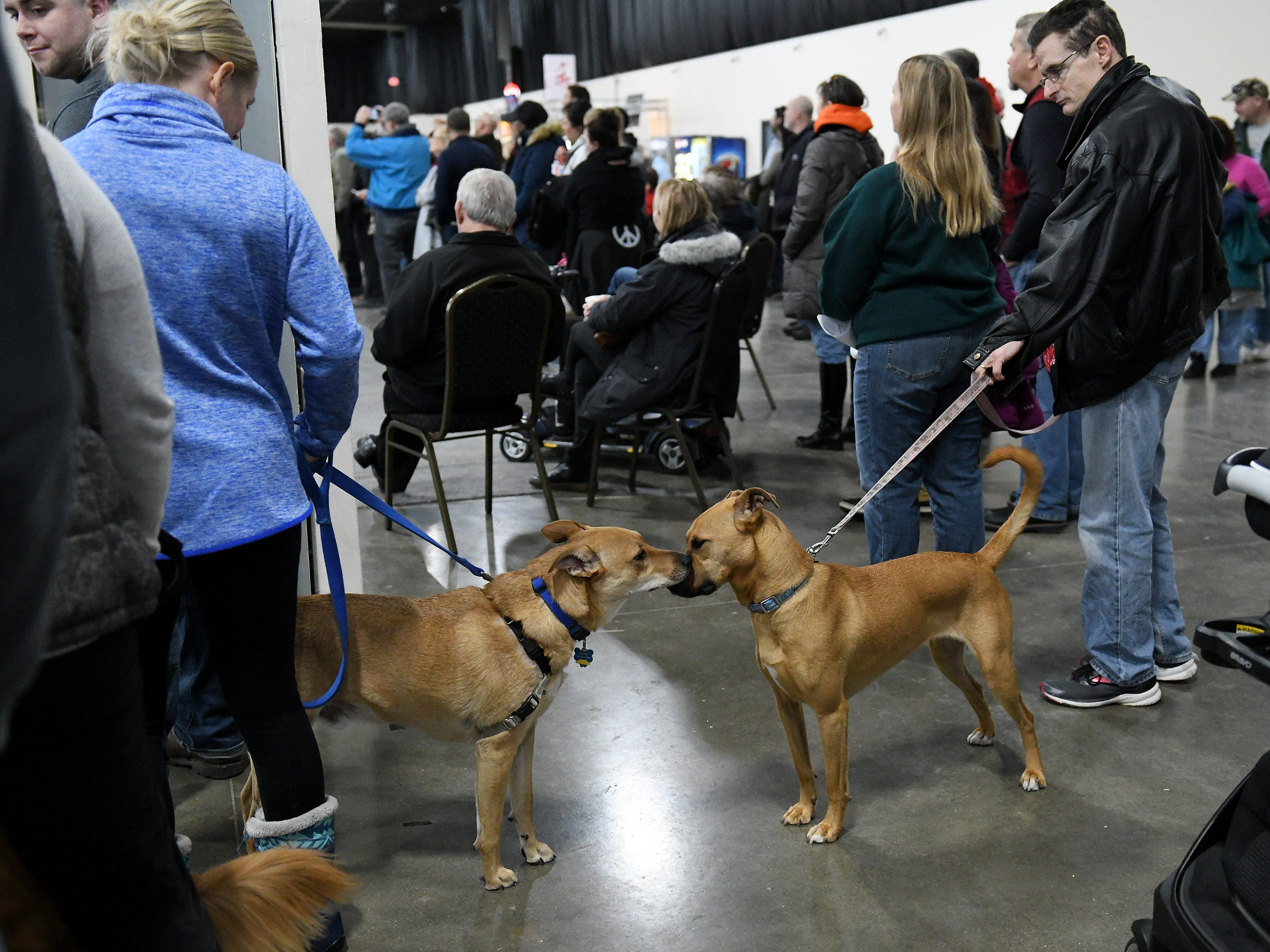 Bruno with his owner, Jenny Zimmerman of Sterling Heights, left, greets Tula with her owner, Ken Cook of Woodhaven at the Michigan Winter Dog Classic.