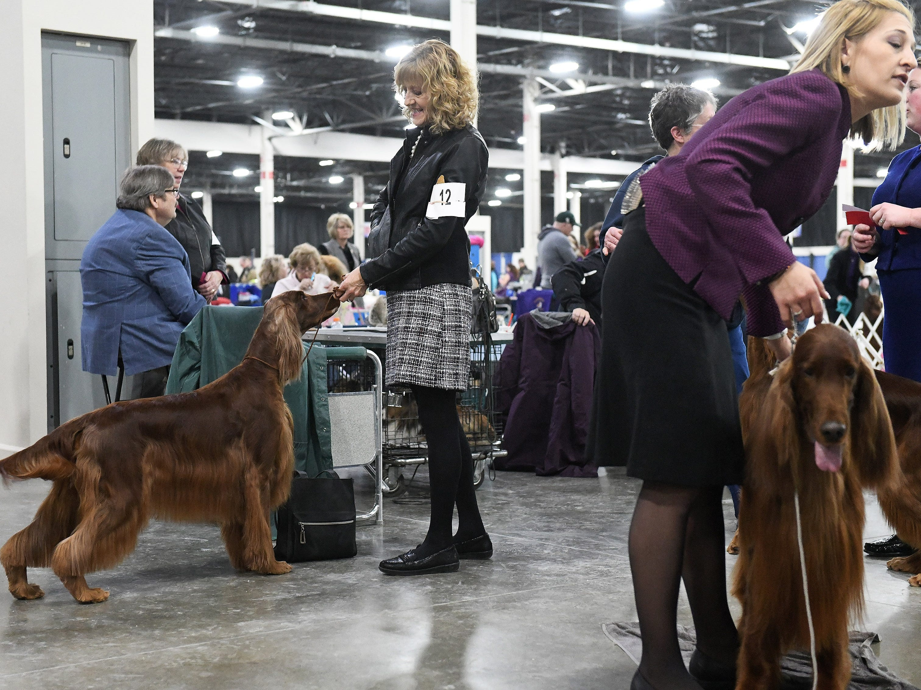 Toni Whipple of Taylor, left, gets her Irish setter, Teezer, ready for competition at the Michigan Winter Dog Classic.