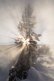 Sunshine through a tree near Artemisia Geyser in Yellowstone National Park.