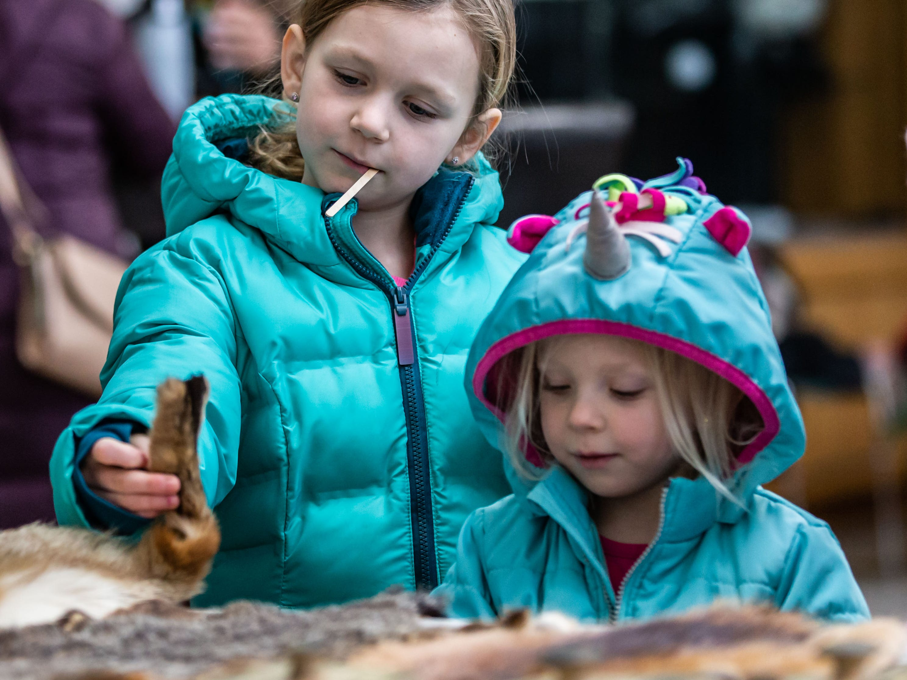 Amelia Kenny, 6, and her sister Grace, 3, of Muskego, learn about native animal pelts during Winterfest at Boerner Botanical Gardens in Hales Corners on Sunday, Jan. 20, 2019. The annual event, hosted by the Friends of Boerner Botanical Gardens, features children's crafts, informational displays, expert-led nature walks and more.