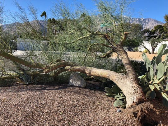 A tree is uprooted on East Garden Road in Palm Springs during windy conditions on Monday, Jan. 21, 2019.