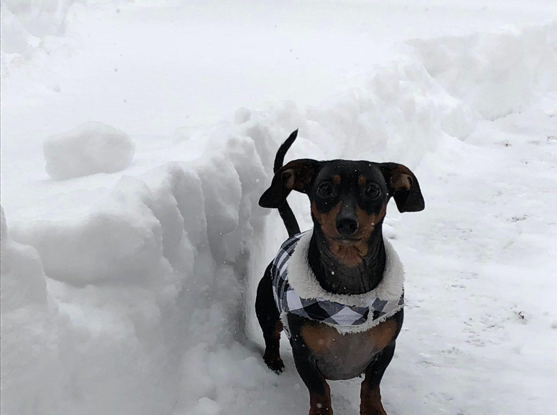 Rudy enjoying the snow. Photo by @SteveSchirmer on Twitter