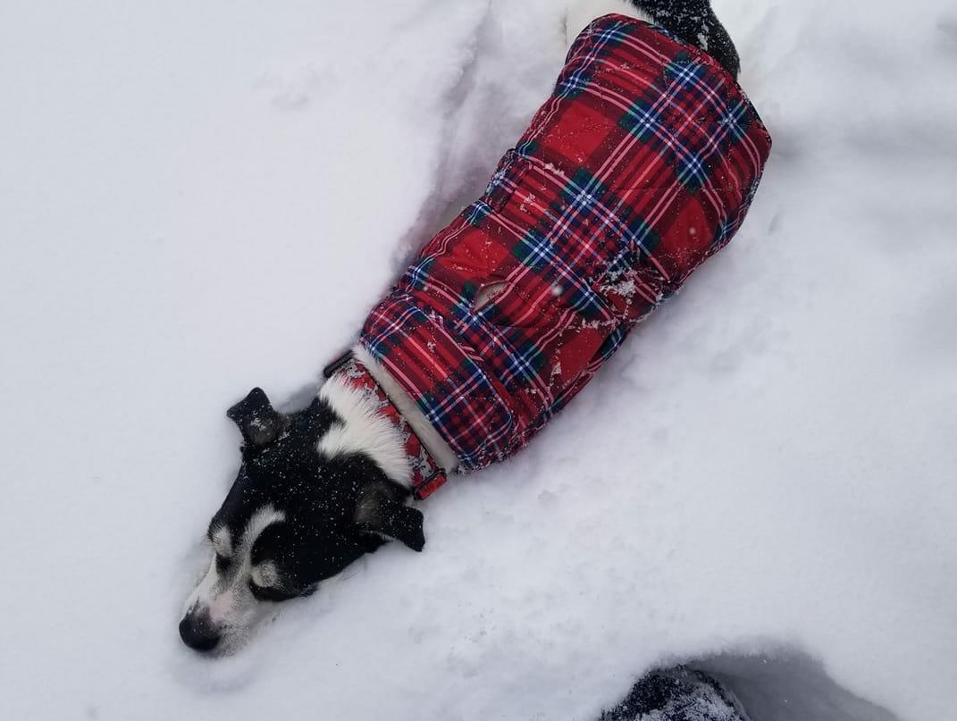 Remus the dog. Photo by Danica Zielinski