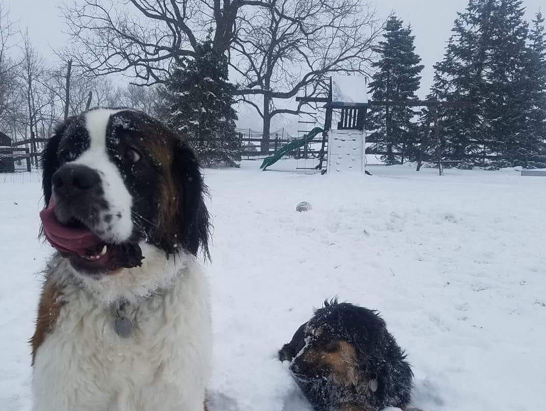 Luna and Bocephus enjoying the snow. Photo by Rachel-lynn Green.
