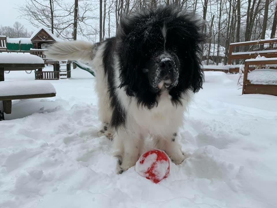 Maximus the dog. Photo by Mary Ann Costello-Sorochty.