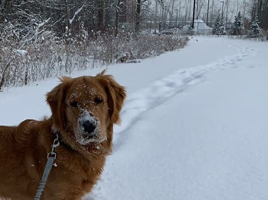 Dexter didn't want to come in from the snow. Photo by Sarah Lasky.