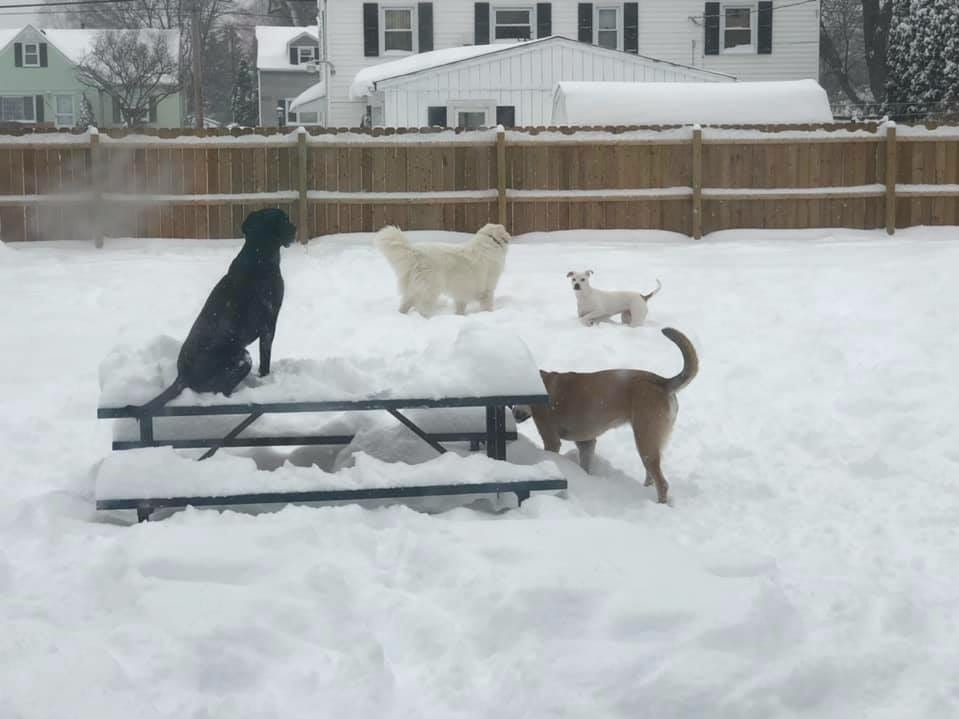 Cole, Pippa, Nelly and Judge. Photo by Ruth E. Kelley
