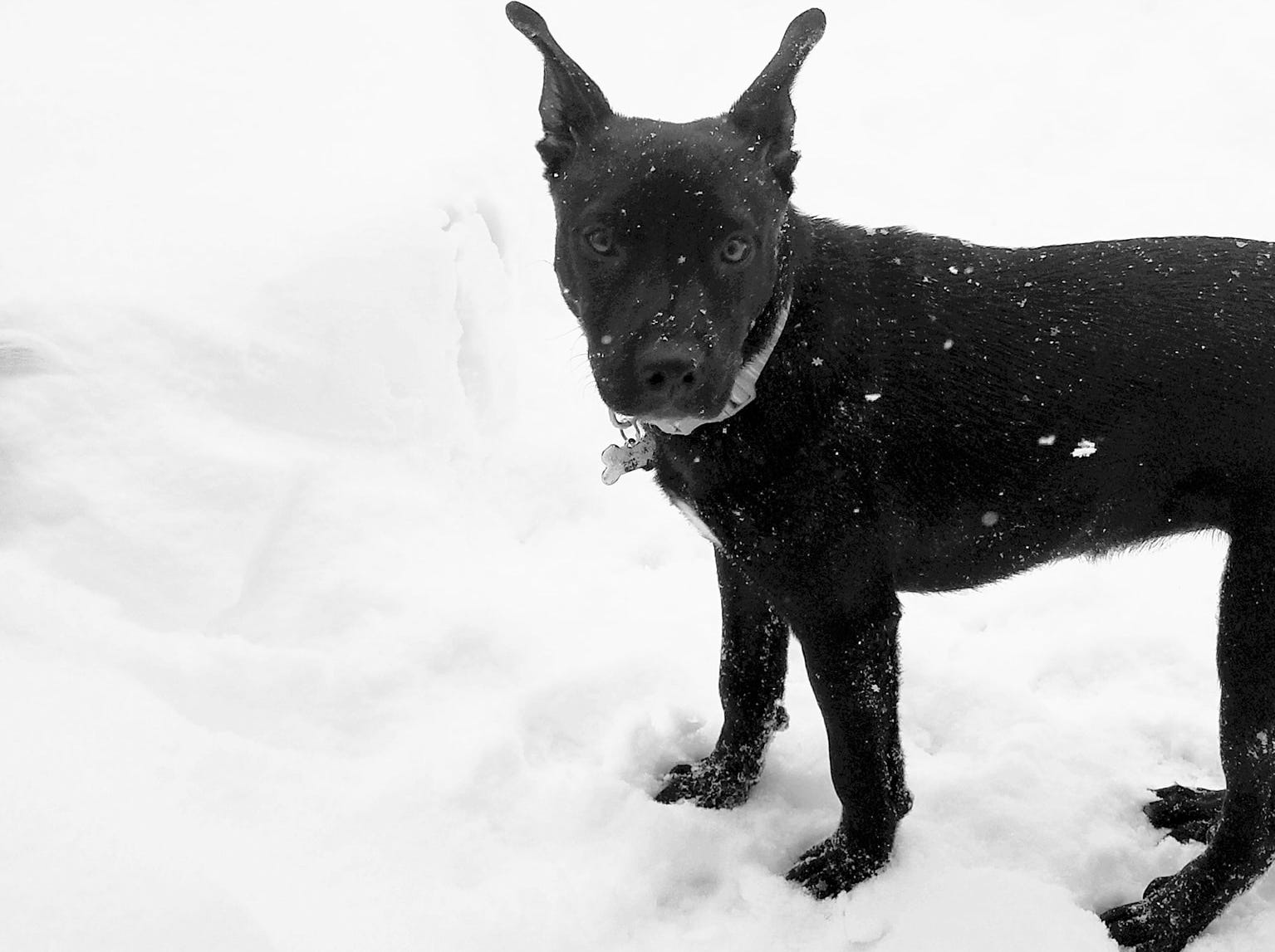 Tessa loved her first big snowstorm in Irondequoit. Photo by Kaitlin J. Joyce.