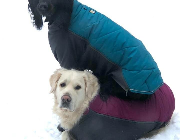 Beeze and Bo'Sun the dogs in their puffer jackets. Provided by Karen Maddison O'Brien