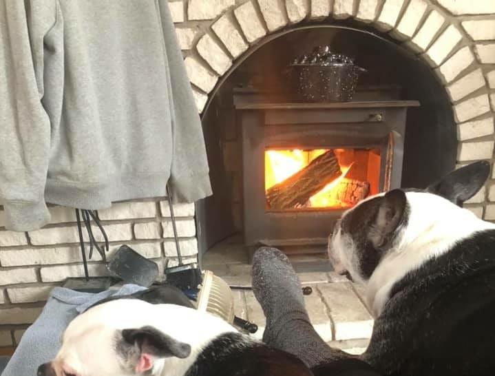 Dena Hornak Ford's Boston terriers.