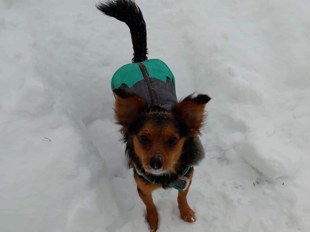 Stella the dog. Photo by Molly Shanahan.