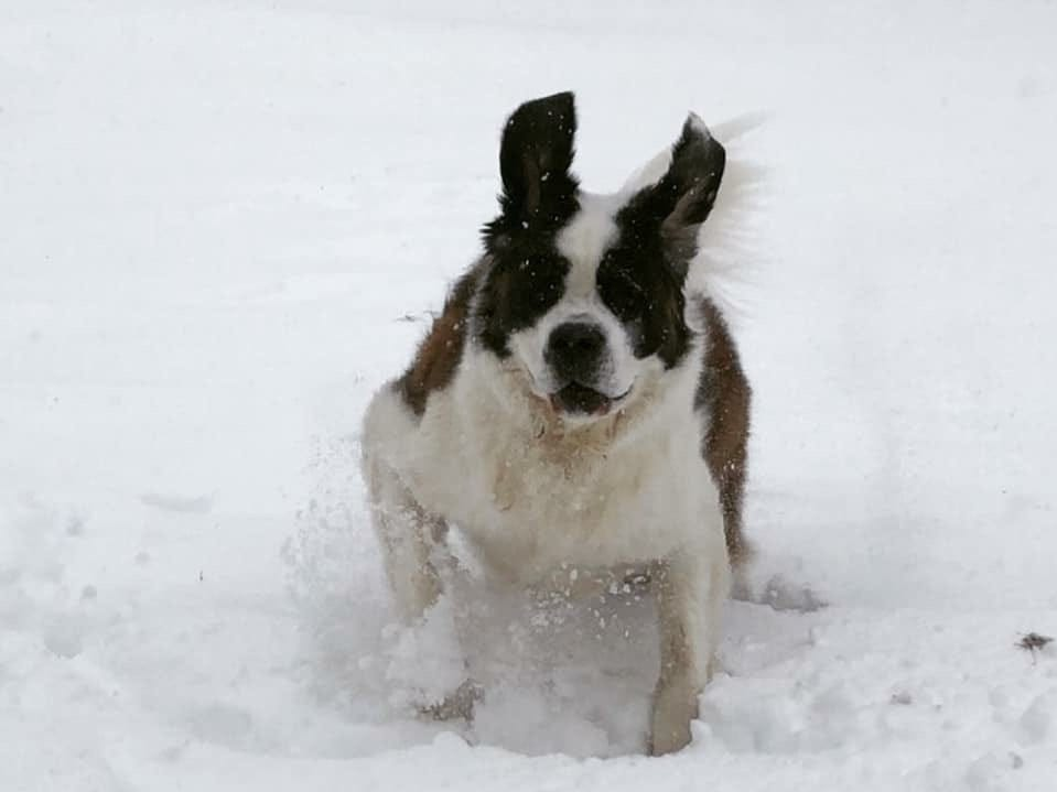 Koda the dog. Photo by Leanne Cassevoy.