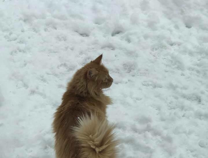 Dozer did not like the snow. Photo by Christine Vavonese McMann