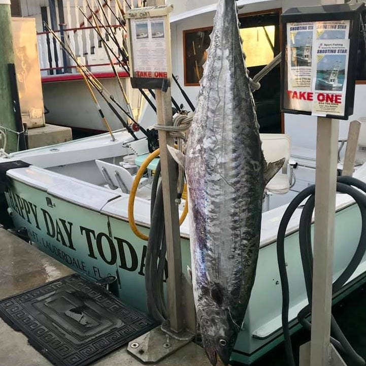 A nearly 100-pound kingfish was caught off Fort Lauderdale. Will it be a record?
