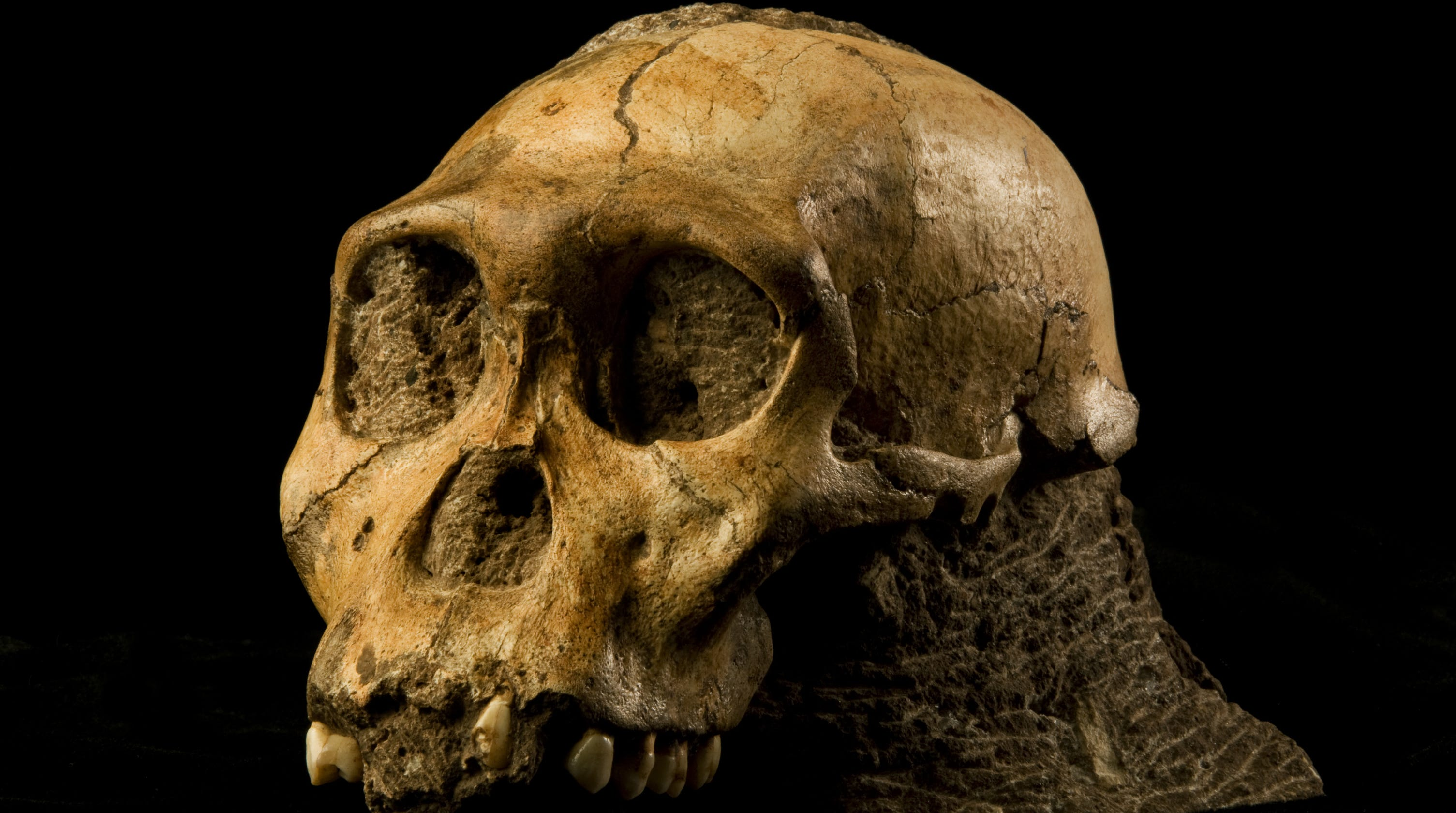 Fossils discovered in South Africa are the 'missing link' in human evolution, study finds