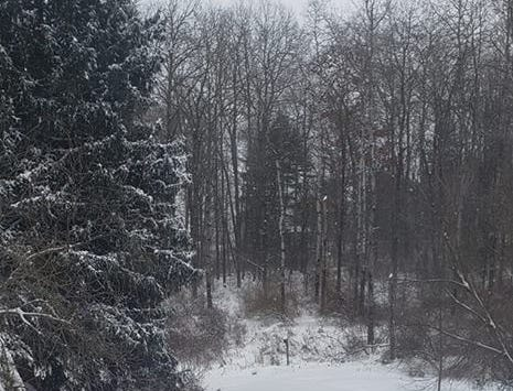A snowy scene captured by a reader in Montour Falls.