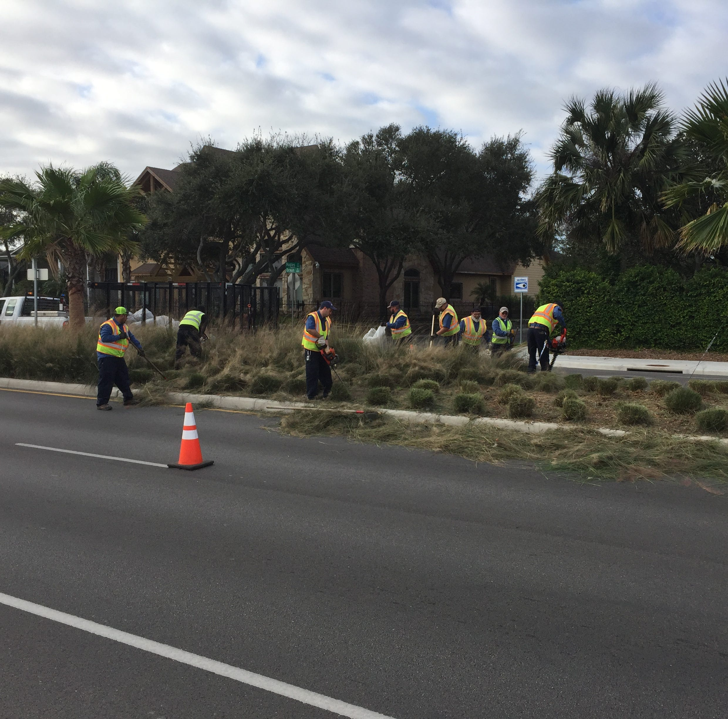 Why is the tall grass in the medians of Corpus Christi's scenic Ocean Drive being chopped?