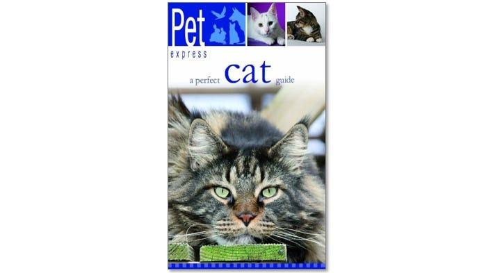 A perfect cat guide