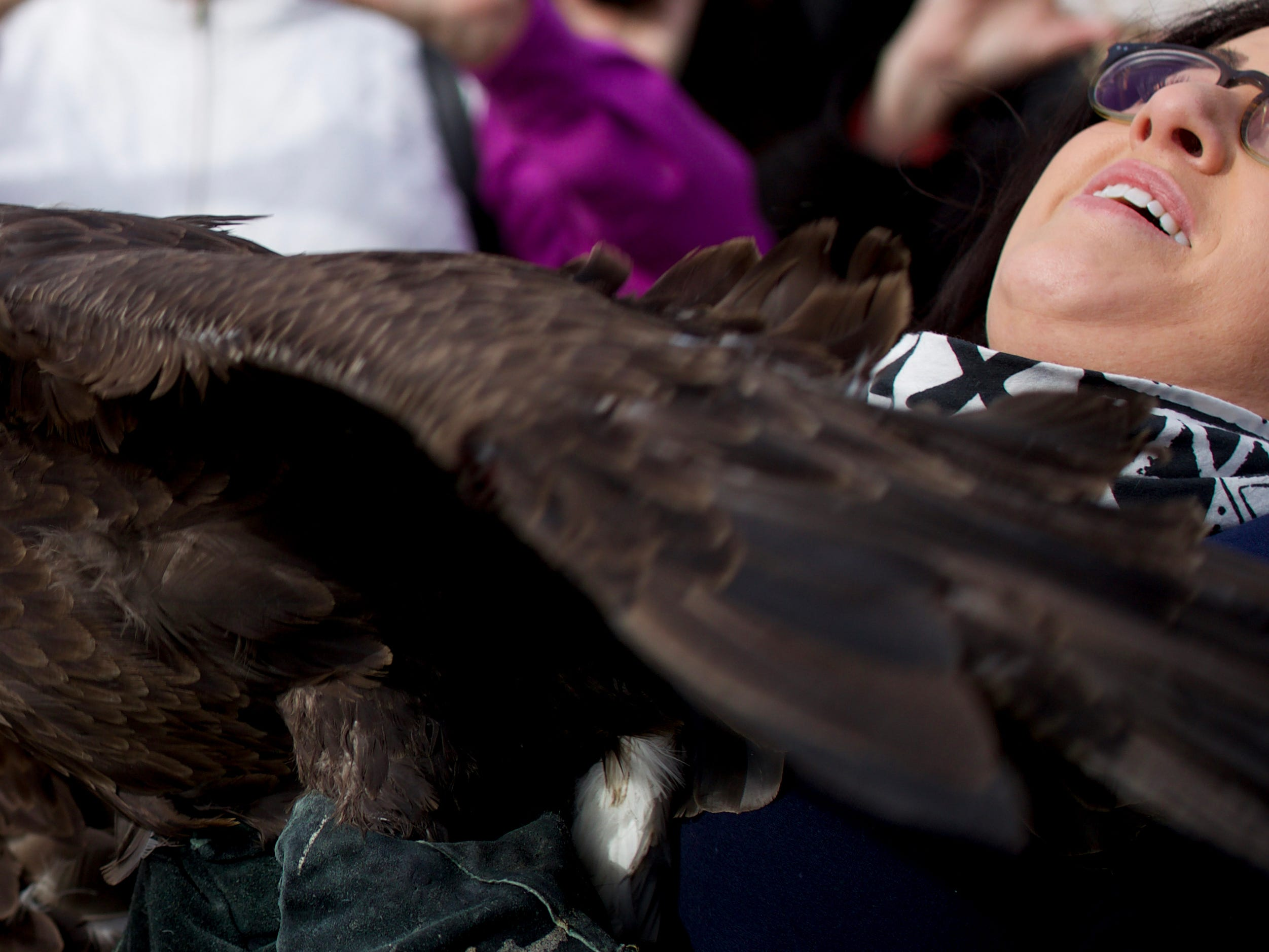 Raptor Rehab gets ready to release a female eagle at George Rogers Clark Homesite in Clarksville.  Jan. 22, 2019