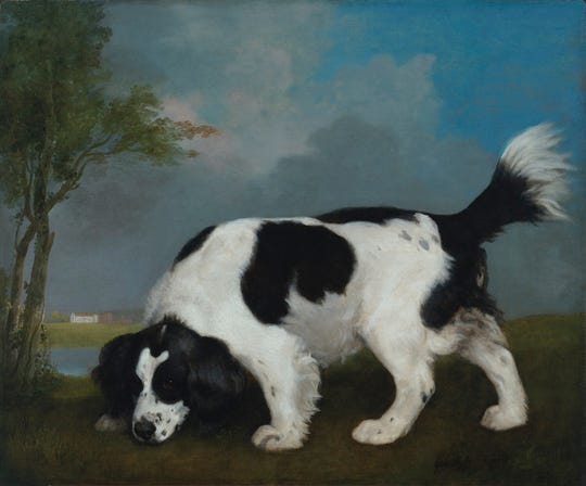 "George Stubbs (British, 1724-1806). ""Black and White Spaniel Following a Scent,"" 1793. Oil on canvas, 25 x 30 in. Virginia Museum of Fine Arts, Richmond, Paul Mellon Collection, 85.506."