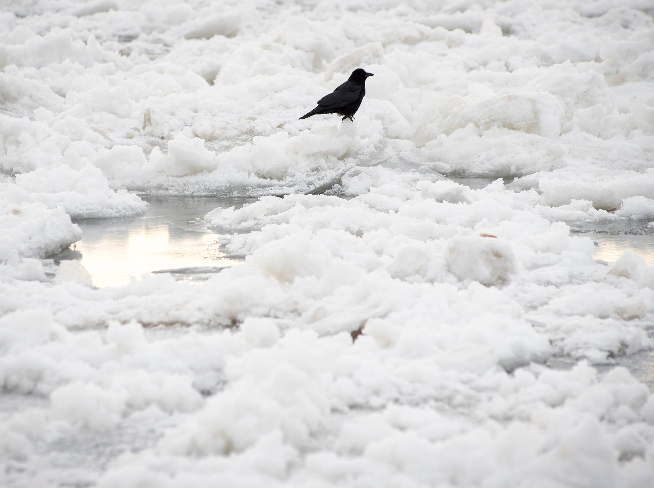A bird sits on ice on the St. Clair River Tuesday, Jan. 22, 2019.