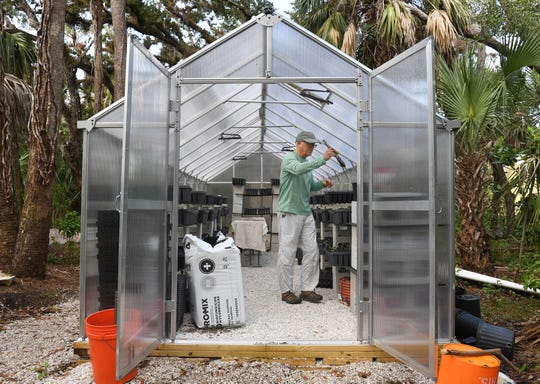 """Steve Palmquist, of Vero Beach, a volunteer with the Pelican Island Audubon Society in Indian River County, transfers live oak tree seedlings into pots for the next stage of growth on Sunday, Jan. 20, 2019, at their greenhouse behind the Audubon House on Oslo Road in Indian River County. Through the """"12 Days of Christmas"""" the Pelican Island Audubon Society received $2,500 and loads of acorns to grow new trees."""