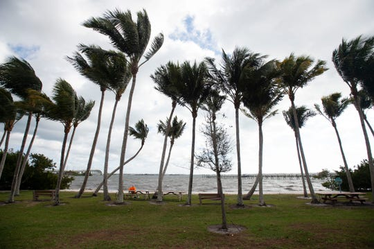 Wind guests neared 25 mph Tuesday, Jan. 22, 2019, at Sewall's Point Park in Sewall's Point. The National Weather Service predicts a windy week, with gusts blowing between 20 to 25 mph through Friday.