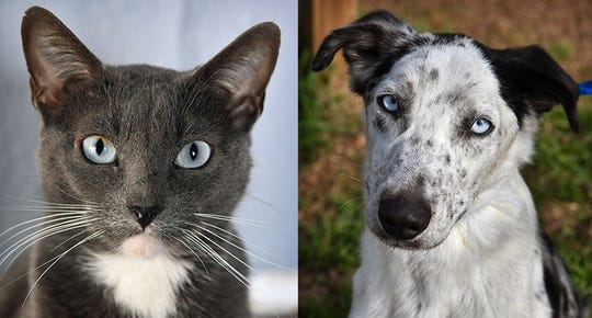 Pets of the Week: Peppermint and Merle