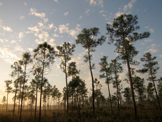 The latest budget recommendations from the Trump Administration calls for more than $63 million to go to Everglades projects. That's just over a quarter of what state leaders requested in February.