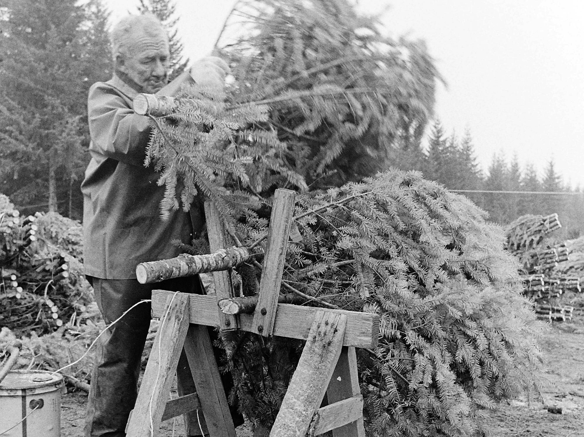 11/20/73Christmas Trees