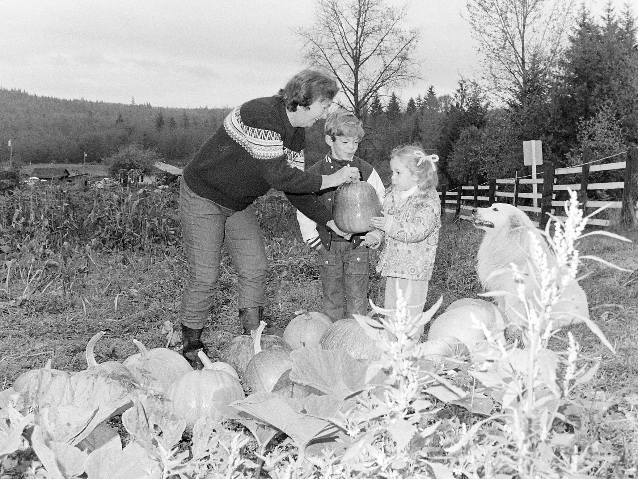 10/24/73Pumpkin Picking