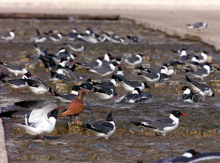 Birds enjoy the Corpus Christi Watergarden on April 25, 2002.