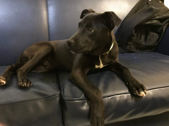 Rudolph the puppy was adopted into a Davenport home after an overflow shelter in Oklahoma attempted to euthanize him.