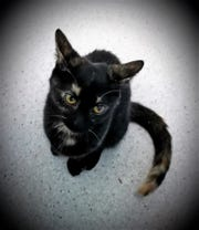 Ellie is at the Humane Society of Ottawa County and needs a new home.