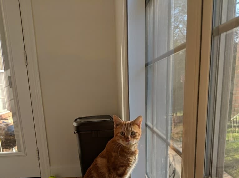 Although Bang has only three legs, he's as spry and happy as a normal cat. A gunshot wound left the veterinarian no choice outside of amputation.