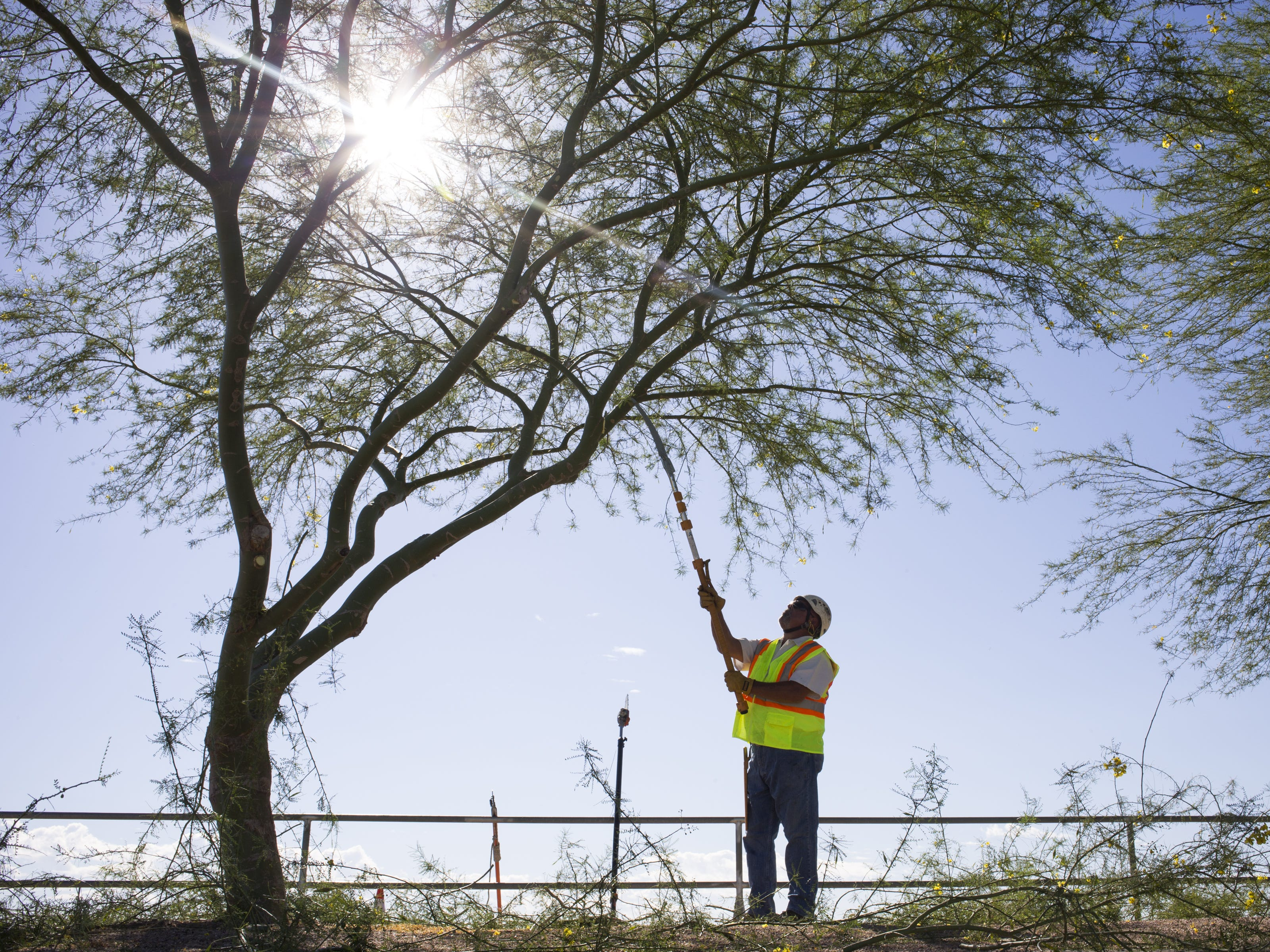 It can grow up to 30 feet while sipping water, making the Palo Verde the perfect tree for the desert, as well as Arizona's official state tree.
