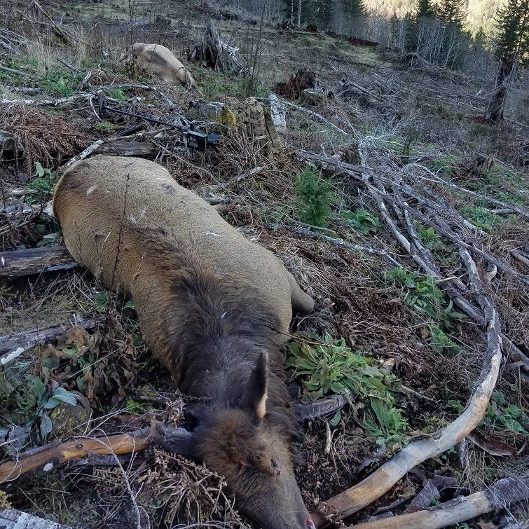 Four elk illegally killed and wasted on Oregon Coast, police seeking information