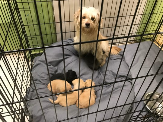 Juniper and her puppies.