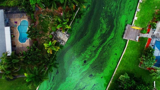 An aerial view of a toxic algae bloom is shown flowing into a canal in Cape Coral during the summer of 2018.