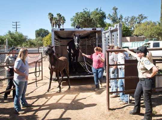Juniper, a neglected mare, and her foal, Olive, arrive at the Humane Society of Ventura County.