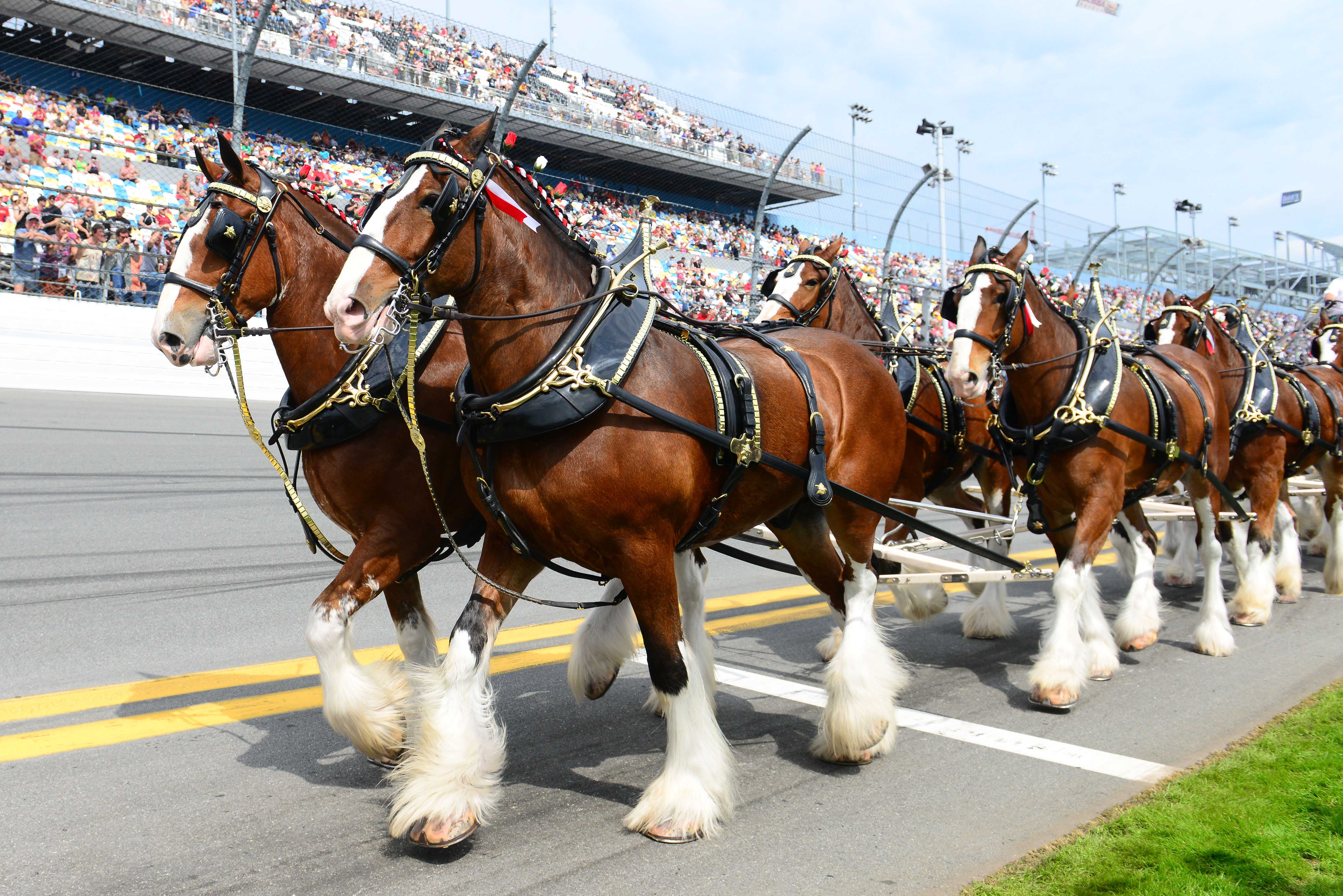budweiser clydesdale commercial 2020